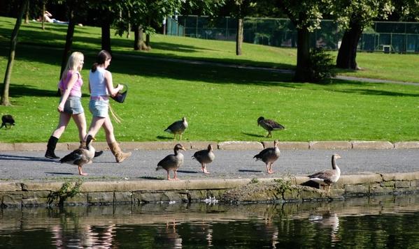 Pond in Ward Park, Bangor